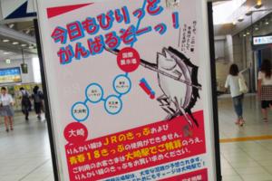 sns_catch